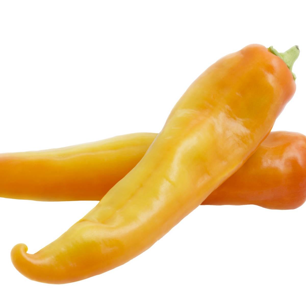 Spitzpaprika 'Pinokkio' gelb ertragreich