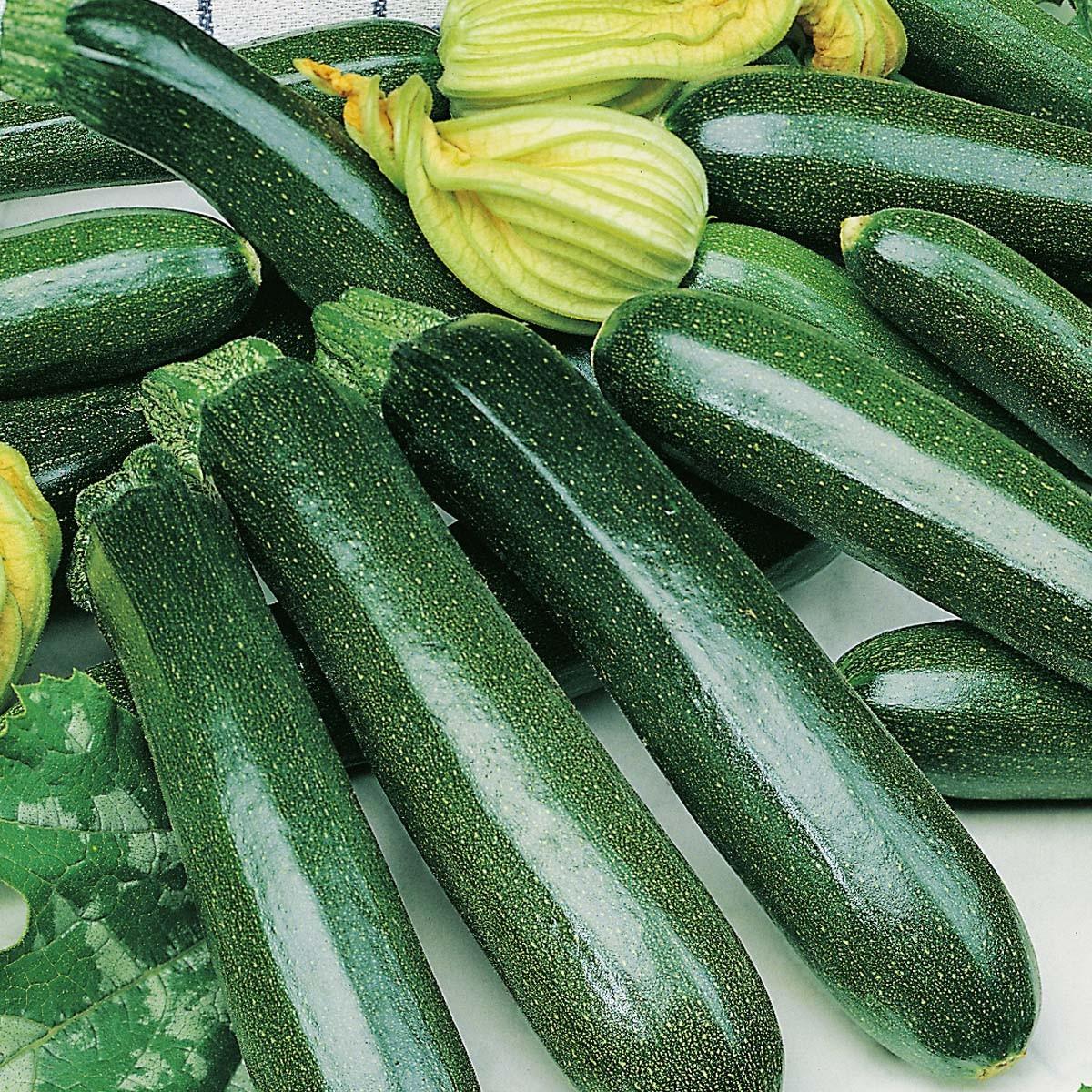 Zucchini 'Zodiac'
