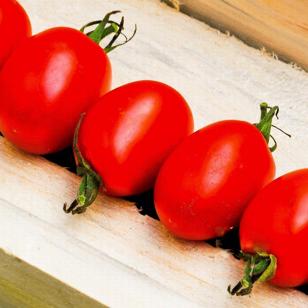 Pflaumen-Cherrytomate Mirado Red veredelt