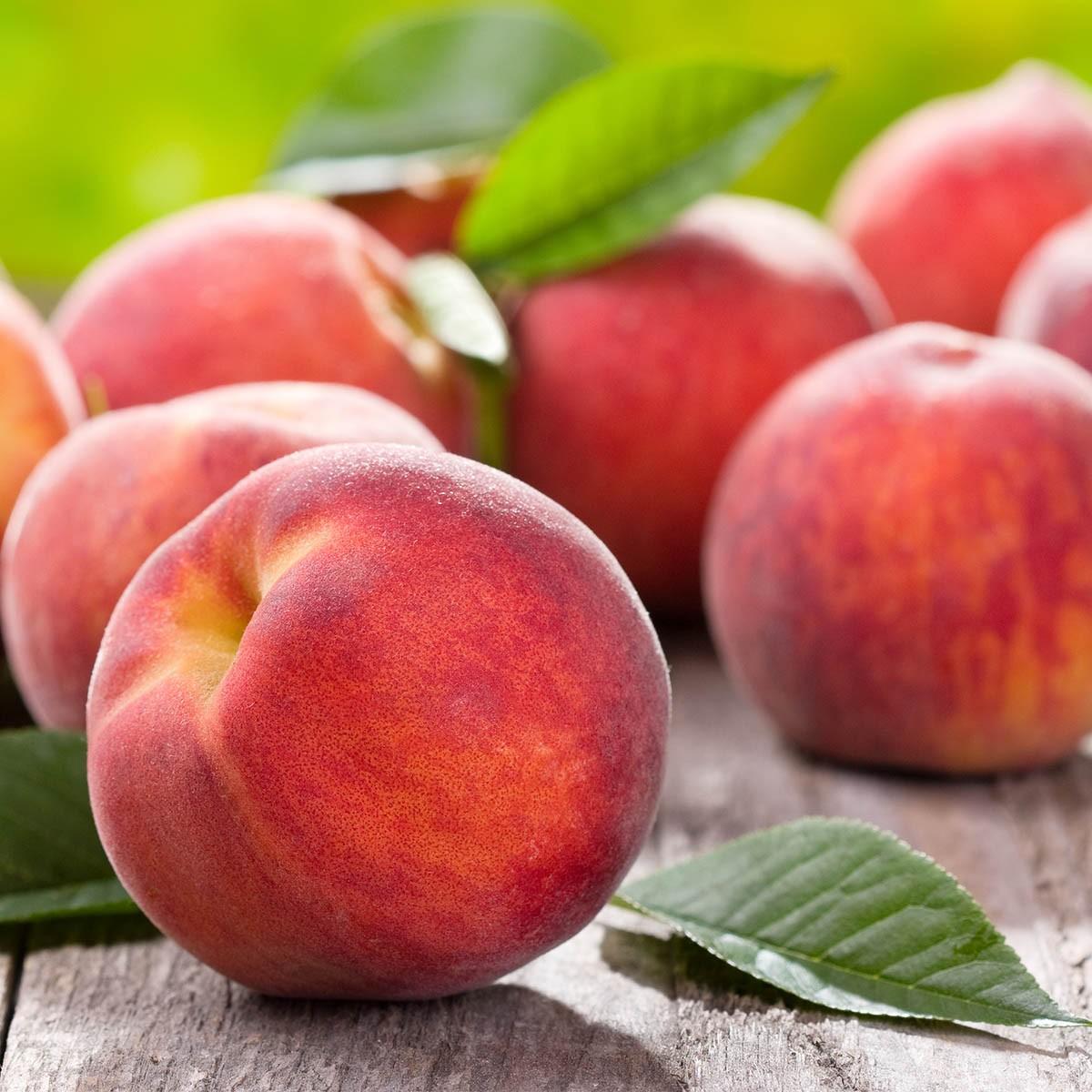 Balkon-Pfirsich 'Fruit Me Peach Me Red'
