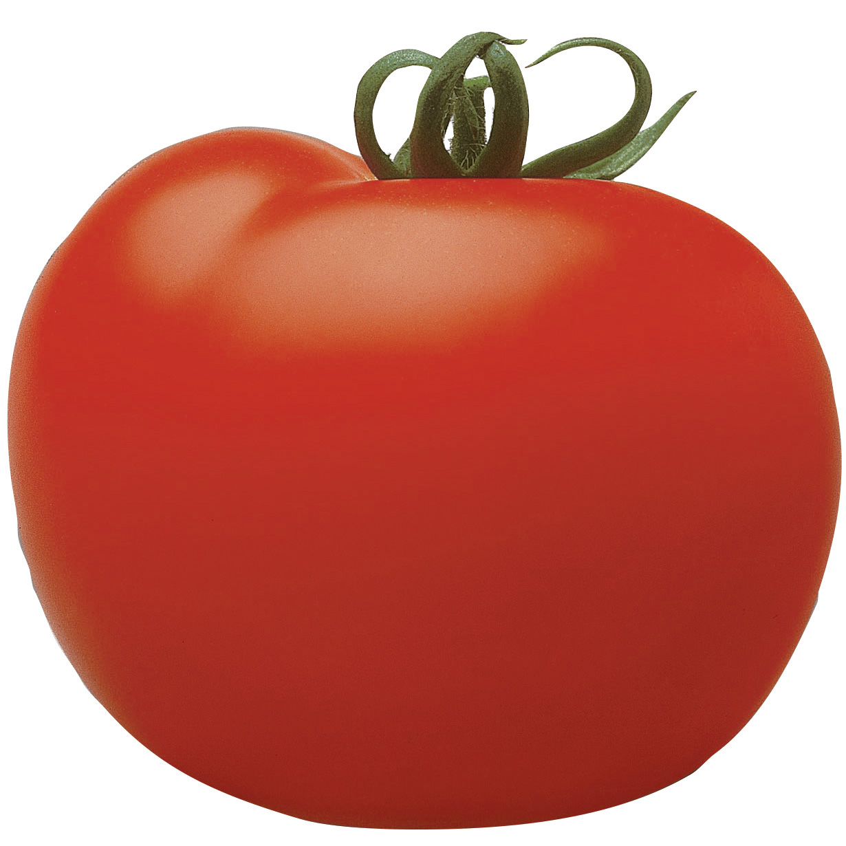 Tomate Cristal (veredelt) - runde Tomate 110 gr.