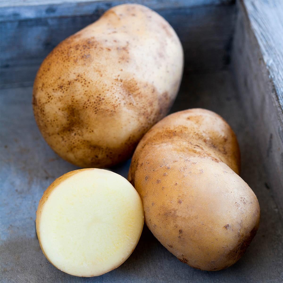 Vital-Kartoffel 'Sarpo Shona'