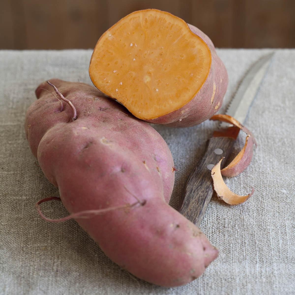 Speise-Süßkartoffel 'Erato® Orange'