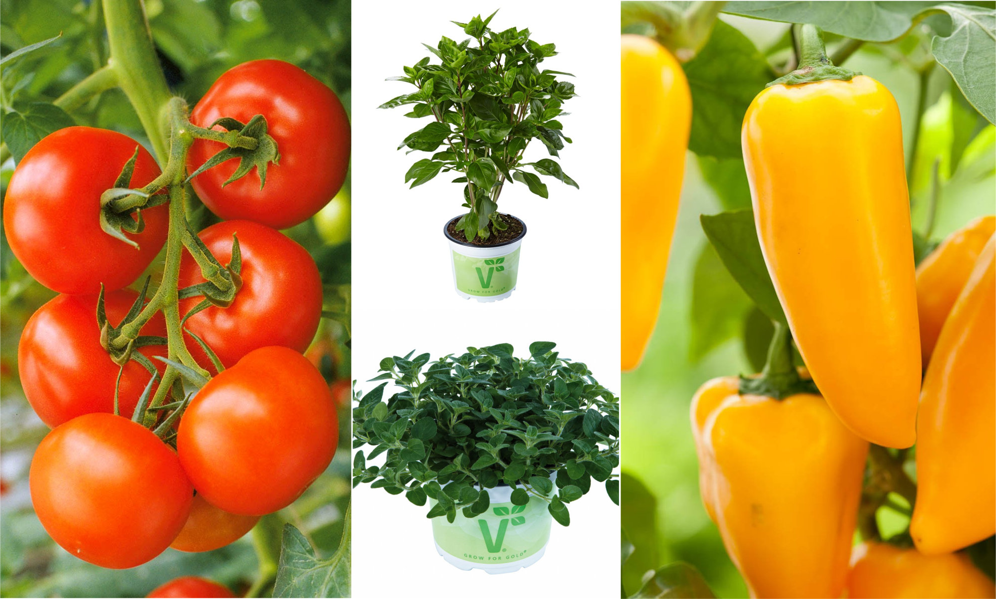 Bella Italia Tomate, Paprika, Basilikum und Oregano Set