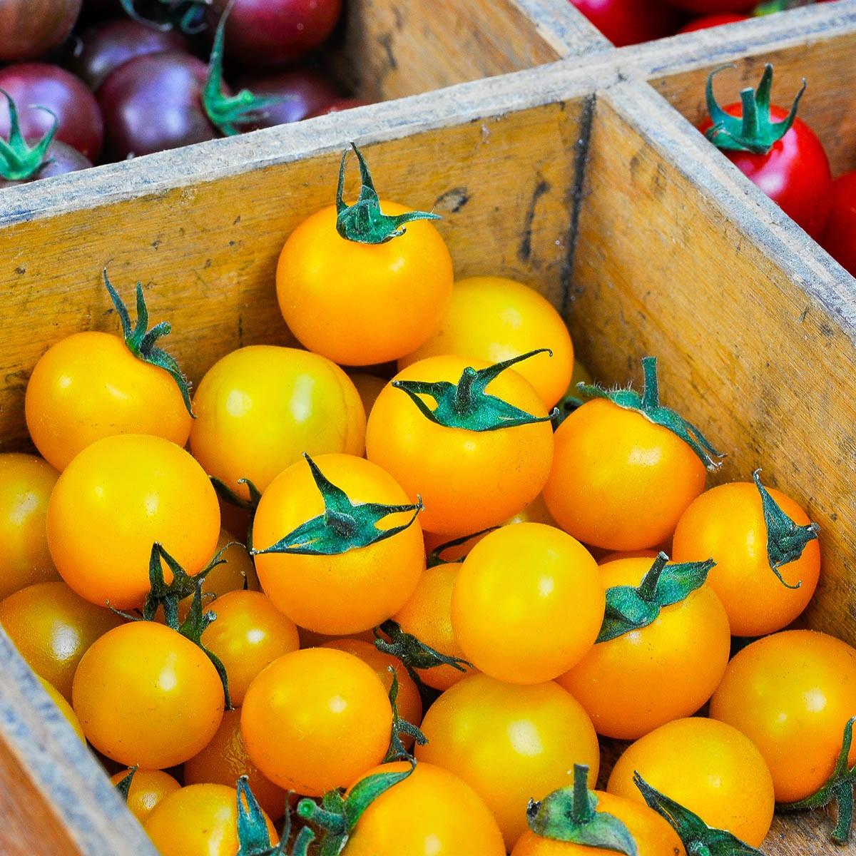 Tomate 'Solena Yellow' (veredelt) gelbe Nektar-Cherrytomate