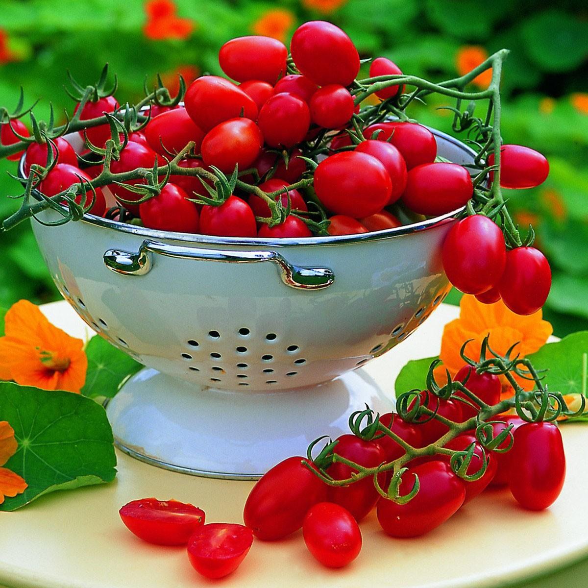 Pflaumen-Cherrytomate (veredelt) 'Mirado Red'