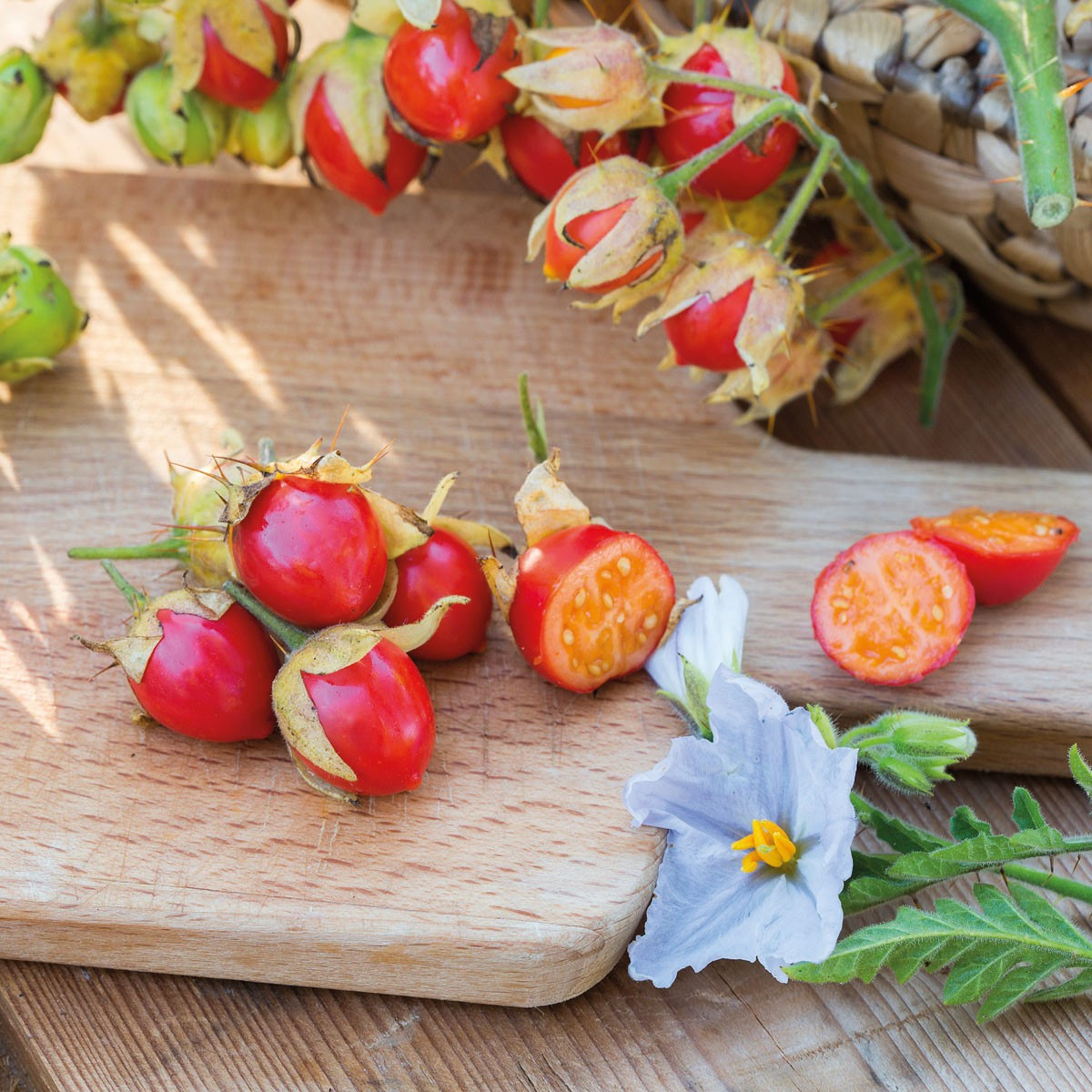 Litschi-Tomate 'StarBenas'