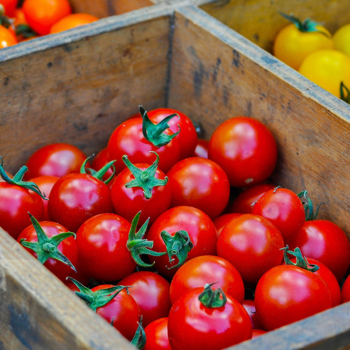 Tomate 'Solena Sweet Red' (veredelt) rote Nektar-Cherrytomate